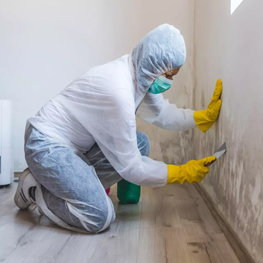 Mold removal service in Florida